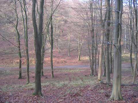forest_2.jpg